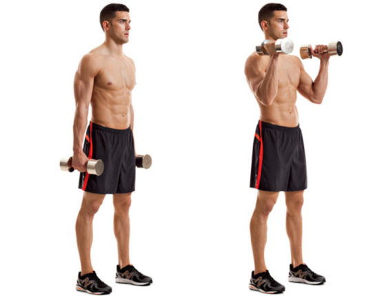 Biceps exercise for beginners